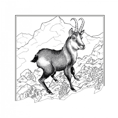 Даху. Иллюстрация Элизы Бизи