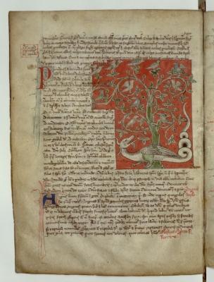 Дракон под деревом перидексион. Рукопись Французской национальной библиотеки (Latin 3630, fol.92v.)