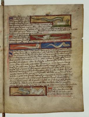Саламандра заползает в ванну с водой. Ящерица. Рукопись Французской национальной библиотеки (Latin 3630, fol.95r.)