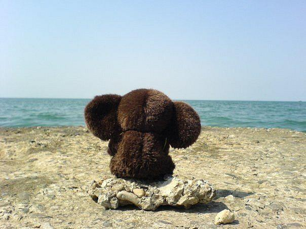 скачать торрент у моря - фото 3
