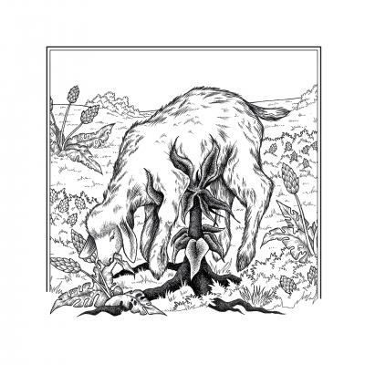 Баранец. Иллюстрация Элизы Бизи