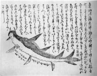 Японская русалка Нингё. Классическая иллюстрация