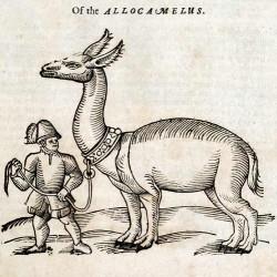 """Аллокамелус из """"Истории животных"""" Эдварда Топселла (1658)"""