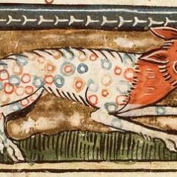 """Многоцветная пантера из манускрипта Якоба ван Маэрланта """"Цветы природы"""""""