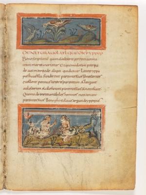 Удоды. Гадюки. Рукопись Городской библиотеки Берна (Cod. 318, fol.11r)