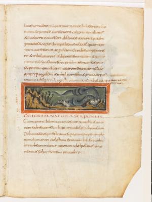 Третья природа змеи. Рукопись Городской библиотеки Берна (Cod. 318, fol.12r)