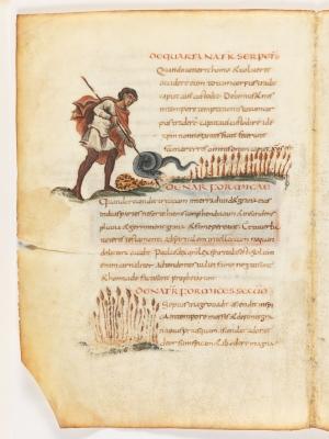 Четвёртая природа змеи. Первая и вторая природы муравья. Рукопись Городской библиотеки Берна (Cod. 318, fol.12v)