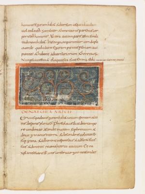 Ежи. Рукопись Городской библиотеки Берна (Cod. 318, fol.14r)