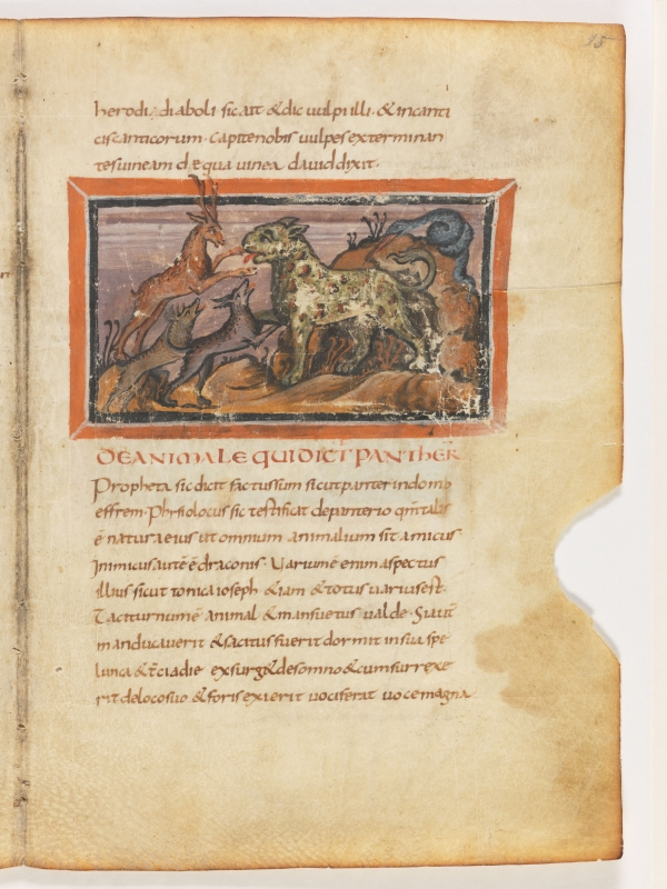 Пантера. Рукопись Городской библиотеки Берна (Cod. 318, fol.15r)