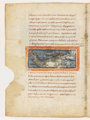 Кит. Рукопись Городской библиотеки Берна (Cod. 318, fol.15v)