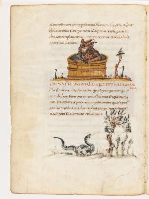 Саламандра в ёмкости с водой. Дерево перидексион. Рукопись Городской библиотеки Берна (Cod. 318, fol.17v)