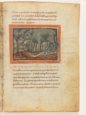 Слон и мандрагора. Рукопись Городской библиотеки Берна (Cod. 318, fol.19r)