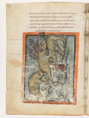 Слонёнок поднимает упавшего слона. Рукопись Городской библиотеки Берна (Cod. 318, fol.19v)