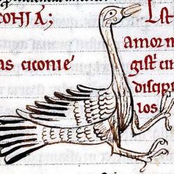Аист. Иллюстрация из португальского авиария XII века
