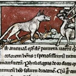 Пантера. Рукопись Бодлеянской библиотеки (MS. Bodley 533, fol.002r)
