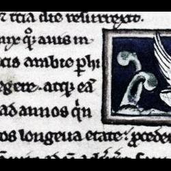 Феникс. Рукопись Бодлеянской библиотеки (MS. Bodley 533, fol.017r.)