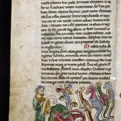 Аспид и другие змеи. (Рукопись Бодлеянской библиотеки. MS. Bodley 602, fol. 024v)