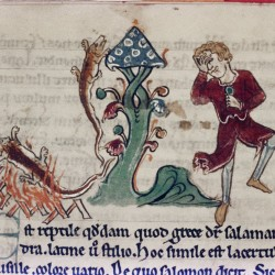 Саламандра. (Рукопись Бодлеянской библиотеки. MS. Bodley 602, fol. 027v)