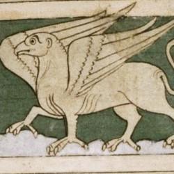 Грифон. Рукопись Бодлеянской библиотеки (MS. Bodley 614, fol. 047r.)