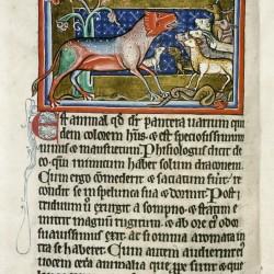 Пантера. (Рукопись Бодлеянской библиотеки. MS. Bodley 764, fol. 007v)