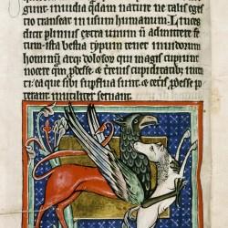 Грифон, сражающийся с лошадью. (Рукопись Бодлеянской библиотеки. MS. Bodley 764, fol. 011v)