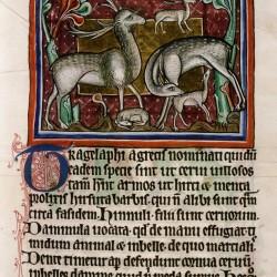 Трагелаф. (Рукопись Бодлеянской библиотеки. MS. Bodley 764, fol. 020r)