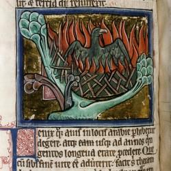 Феникс в погребальном костре. (Рукопись Бодлеянской библиотеки. MS. Bodley 764, fol. 070v)
