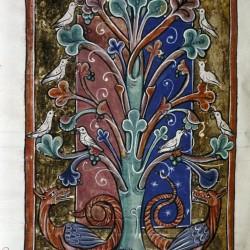 Дерево перидексион. (Рукопись Бодлеянской библиотеки. MS. Bodley 764, fol. 091v)