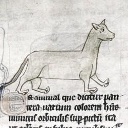 Пантера. Рукопись Бодлеянской библиотеки (MS. e. Mus. 136, fol.017r)
