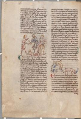 Собака ловит убийцу. Ибекс.  Рукопись библиотеки Паркера (CCC, Ms.22, fol.165v.)