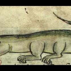 Сирена-змея. Иллюстрация из бестиария Энн Уолш, KS 1633 4, fol.56v)