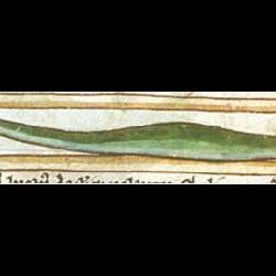 Якул (Рукопись Британской библиотеки MS Harley 3244, fol. 62v)
