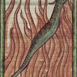 Саламандра (Рукопись Британской библиотеки MS Harley 3244, fol. 63r)