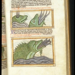 Киты. Рукопись Британской библиотеки (MS Harley 3244, fol. 65r.)