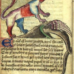 Дракон прячется в нору от пантеры. Илюстрация бестиария Энн Уолш (Bestiary of Anne Walsh)