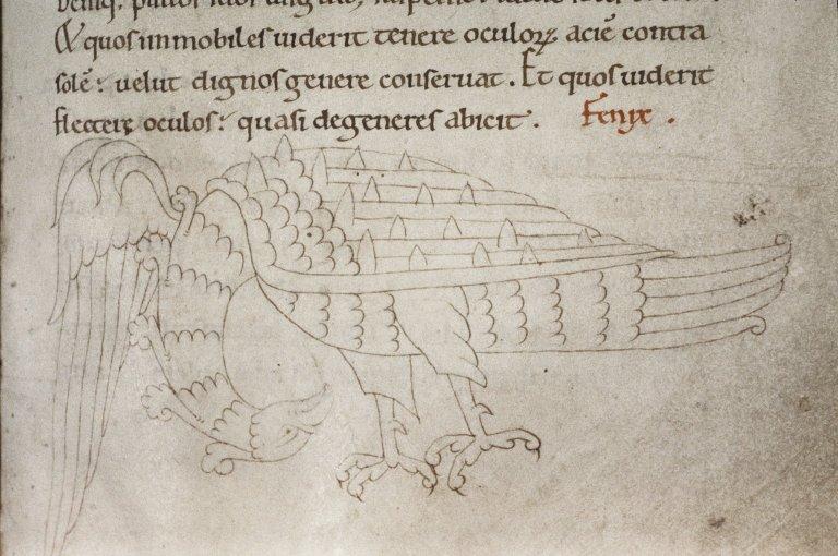 Феникс. Рукопись Бодлеянской библиотеки (MS Laud. misc.247, fol.144r.)