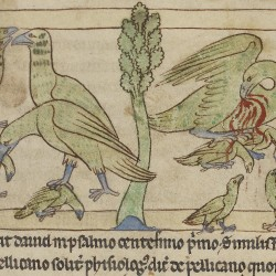 Пеликаны. Нортумберлендский бестиарий. Музей Гетти, Лос-Анджелес (MS. 100, fol.41r.)