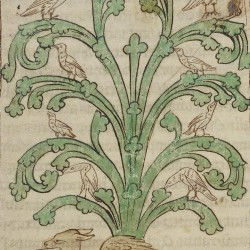 Дерево перидексион. Нортумберлендский бестиарий. Музей Гетти, Лос-Анджелес (MS. 100, fol.45r.)