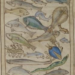 Рыбы. Нортумберлендский бестиарий. Музей Гетти, Лос-Анджелес (MS. 100, fol.48v.)