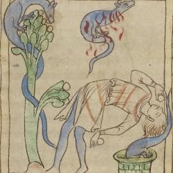 Саламандры. Нортумберлендский бестиарий. Музей Гетти, Лос-Анджелес (MS. 100, fol.58r.)