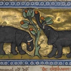 Слоны. Рукопись музея Гетти в Лос-Анджелесе (MS. Ludwig XV 3, fol.99r.)