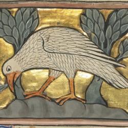Феникс. Рукопись музея Гетти в Лос-Анджелесе (MS. Ludwig XV 4, fol.77v.)