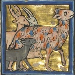 Пантера. Рукопись музея Гетти в Лос-Анджелесе (MS. Ludwig XV 4, fol.93r.)