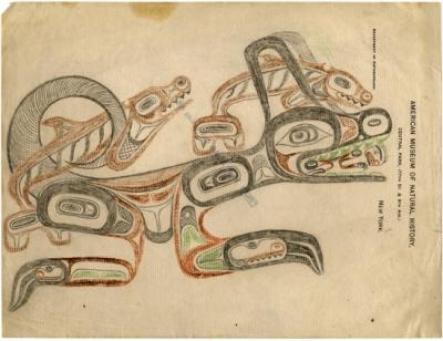 Васго. Рисунок из коллекции Американского музея естественной истории