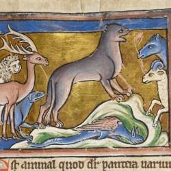 Пантера. Рукопись Британской библиотеки (Royal 12 C XIX, fol. 16r.)