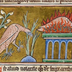 Феникс. Рукопись Британской библиотеки Royal (12 C XIX, fol. 49v.)