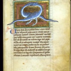 Гадюка. Рукопись Британской библиотеки Royal (12 C XIX, fol. 64r.)