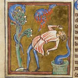 Саламандра. Рукопись Британской библиотеки (Royal 12 C XIX, fol. 68v.)