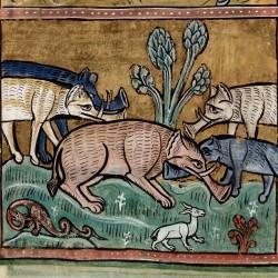 Слоны. Рочестерский бестиарий (Royal 12 F XIII, fol. 11v.)