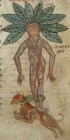 Извлечение мандрагоры с помощью собаки. Иллюстрация из фармакопейного сборника XII века